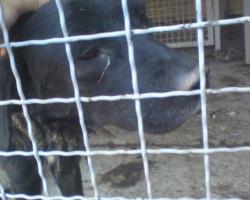 Нехуман третман на бездомните животни во кумановскиот стационар , апелираат активистите(ВОЗНЕМИРУВАЧКА ФОТОГРАФИЈА)