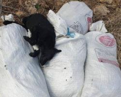 Мртви кучиња во вреќи фрлени во касарната во населба Карпош во Куманово